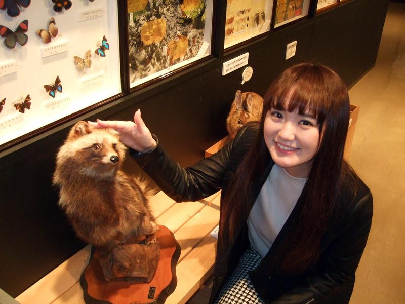 実際、はく製に触れる事ができます。 水戸市立博物館